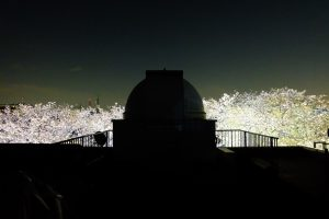 夜桜と天文台